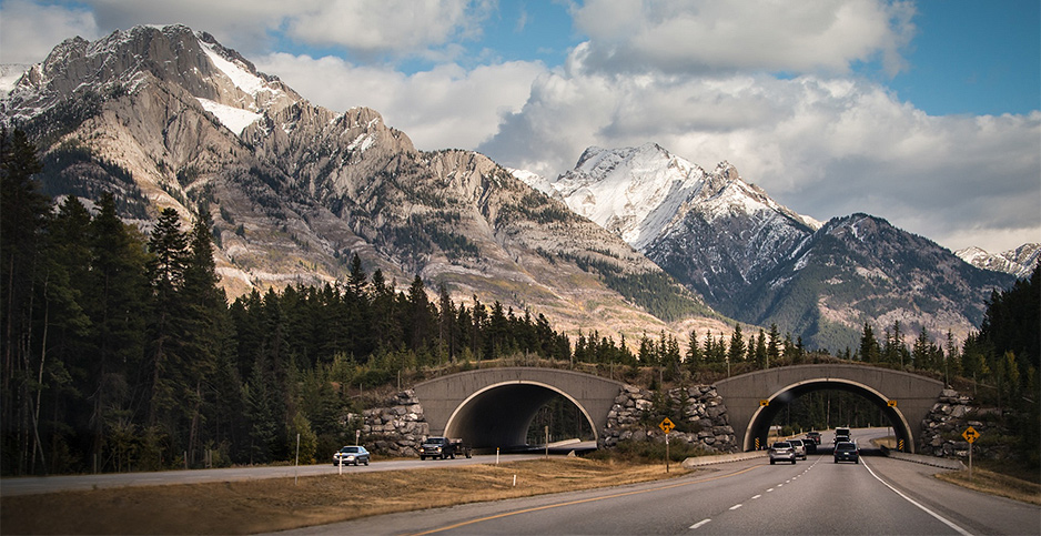 A wildlife overpass in Banff, Canada. Janice/Adobe Stock/Wildlands Network
